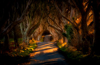 Breaking Light at the Dark Hedges