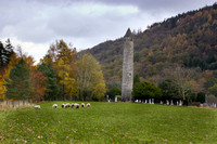 sheep at the round tower