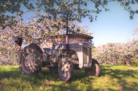 Tractor in Armagh Orchard